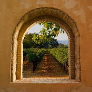 Venster op wijngaard-L