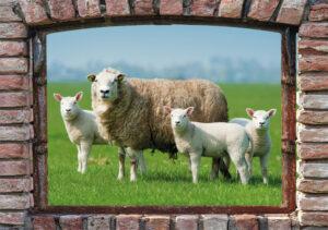 95x130 cm Boerenvenster schapen