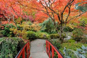 95x130 cm Rode brug naar Japanse tuin