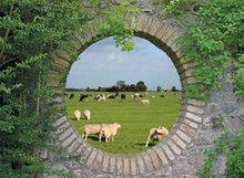 95x120 cm Geheime tuin: Hollands landschap