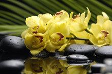 Gele orchidee met stenen