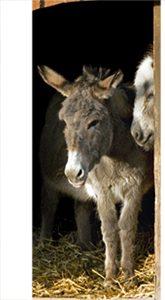 deurposters met dieren