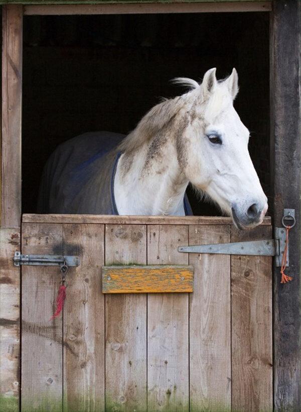 tuinposter 130x95 cm paard in de stal