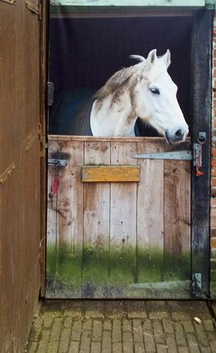 Er staat een paard in de tuin…