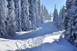 Winterlandschap bospad in sneeuw