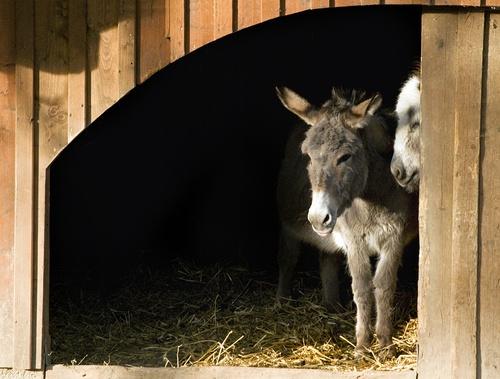 tuinposter doorkijk ezeltje in stal