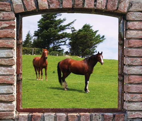 tuinposter doorkijk Boeren venster paarden