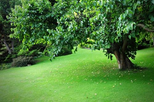 tuinposter met Boom op grasveld