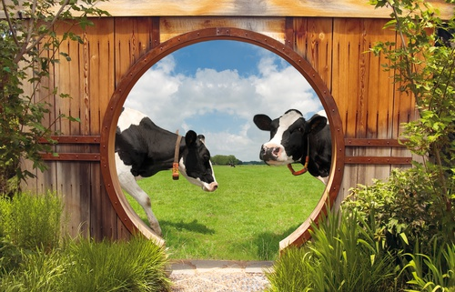 tuinposter doorkijk gat in schutting weiland koeien