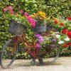 mooiste tuinposter oude fiets met bloemen