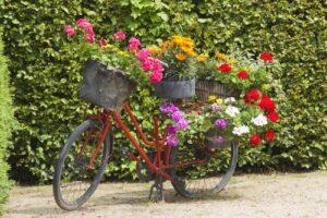 Oude fiets met bloemen