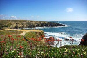 Vergezicht strand met bloemen