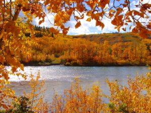 Doorkijk herfstbos