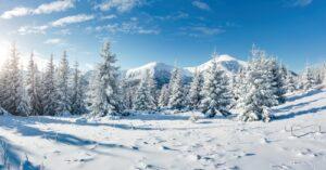Winterlandschap met bomen
