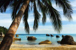 Tropisch palmenstrand