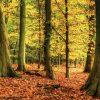 tuinposter herfstbos - tuindoek