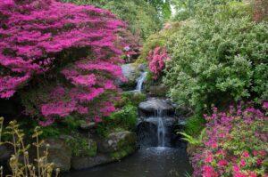 Paarse bloemen bij waterval