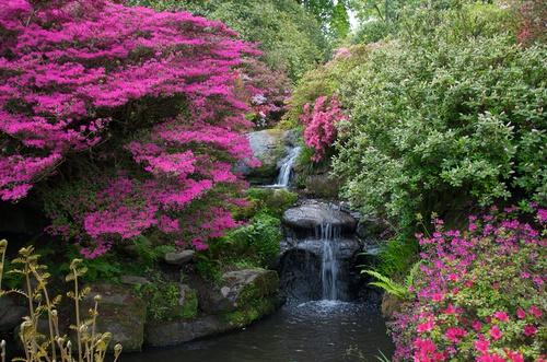 tuinposter met waterval paarse bloemen