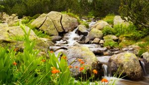 Waterval papaver