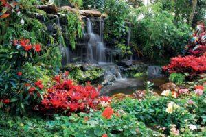 Waterval rode bloemen