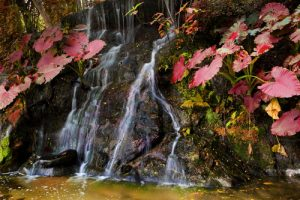 Waterval in tuin