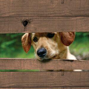 Hond door schutting 4 planken bruin