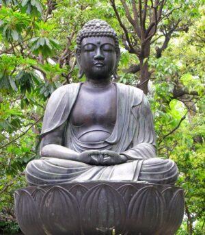 Boeddha oerwoud