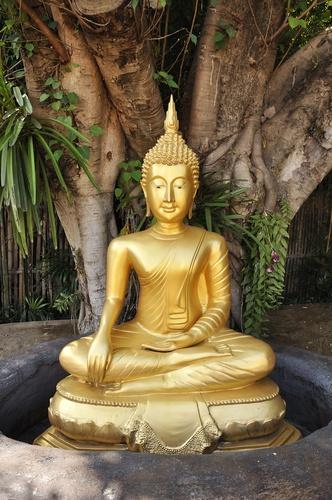 tuinposter boeddha in jungle