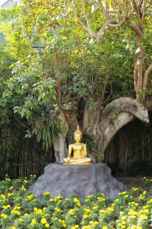 Boeddha onder boom