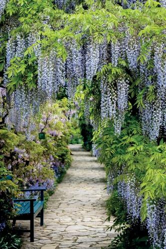 tuinposter met doorkijk blauwe regen met bankje