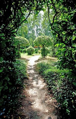 tuinposter doorkijk door heg
