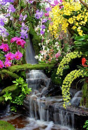 Waterval bloemen
