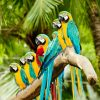canvas Papegaaien op tak