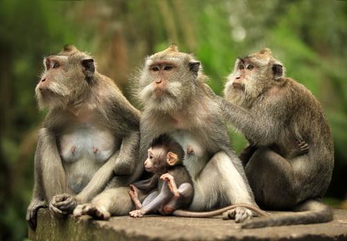 tuinposter dieren Apenfamilie