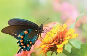 Vlinder op gele bloem