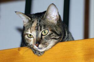 Kat over hek