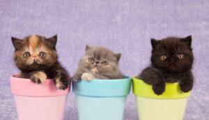 Katjes in bloempot