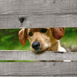 Hond door schutting 4 planken GRIJS