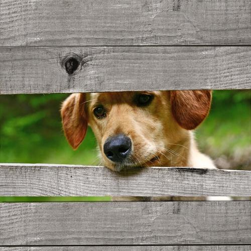 tuinposter Hond door schutting