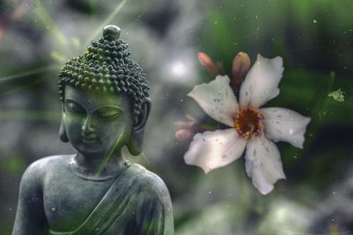 schuttingposter boeddha bloemen