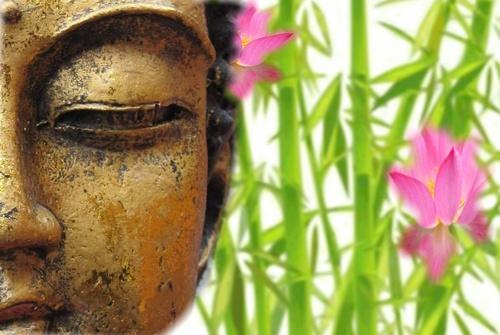 schuttingposter boeddha bamboe en roze bloemen