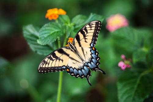 vlinderposter vlinder op oranje bloem