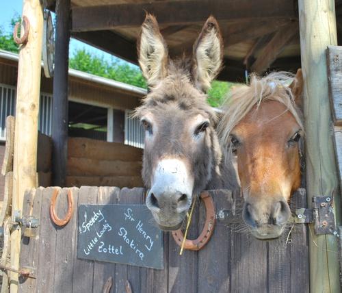 Ezeltje en paard over staldeur
