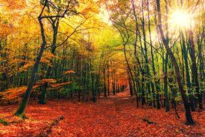 Bos in zonnige herfstkleuren