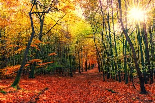 herfst poster bos in zonnige herfstkleuren