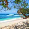 tuinposter tropisch strand met bomen