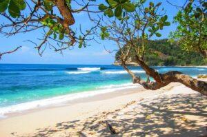 Tropisch strand met bomen 120x160 cm