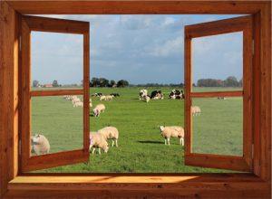 Open raam met koeien en schapen