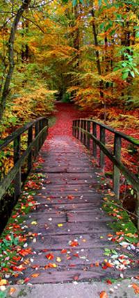 Brug naar herfstbos