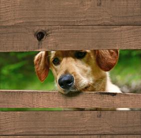 Hond door schutting